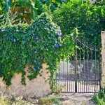 Кобея на заборе